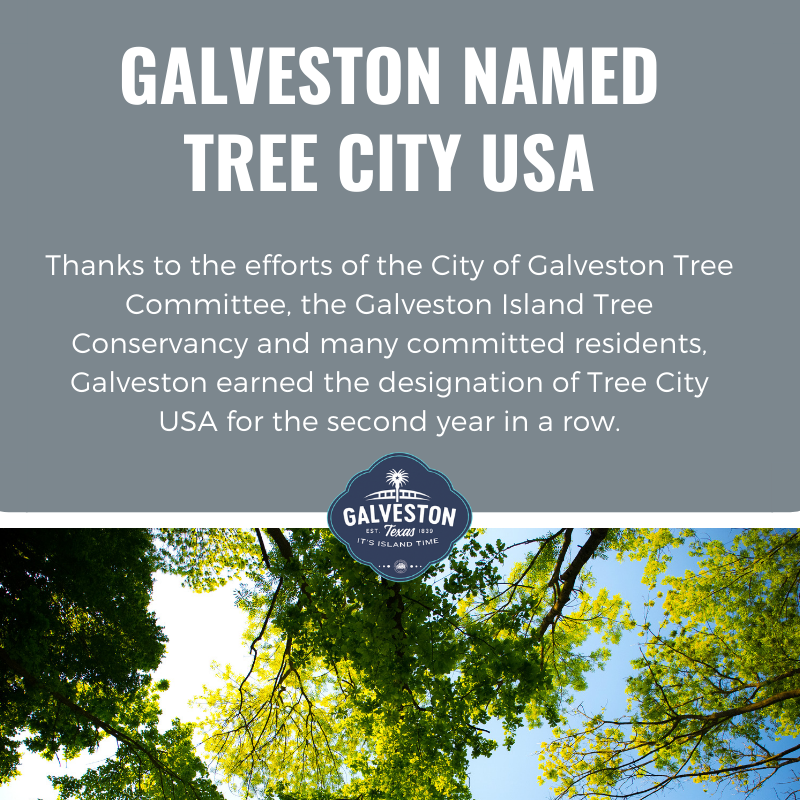 Tree City USA designation
